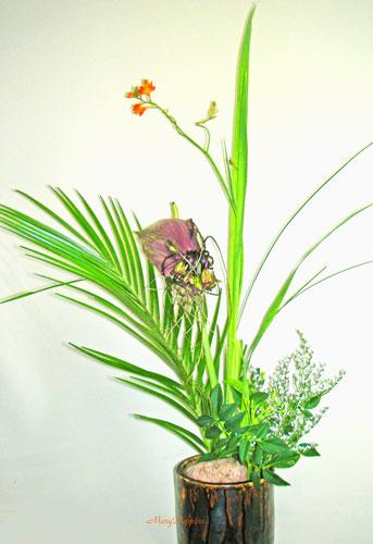 姫桧扇水仙とブラックキャットのアレンジ