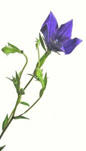 9月2日の誕生花