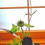 オミナエシと向日葵