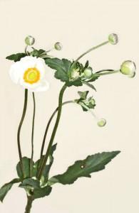 9月14日の誕生花