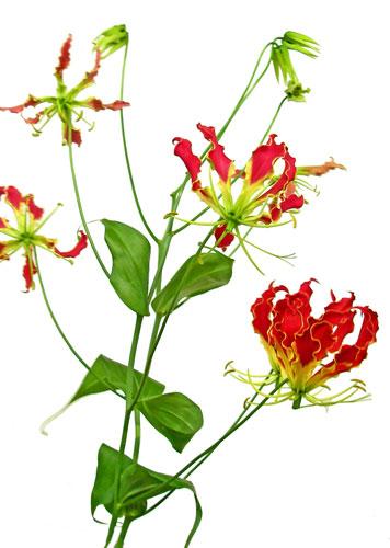 10月19日の誕生花