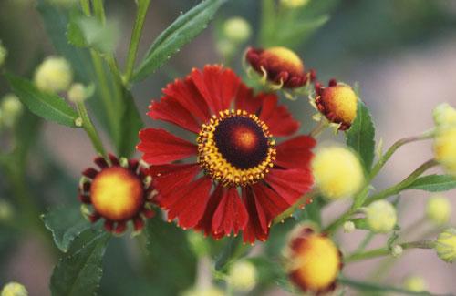 9月28日の誕生花