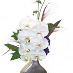 胡蝶蘭と秋明菊