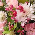 タカネルビーとスプレー菊