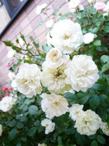 10月22日の誕生花