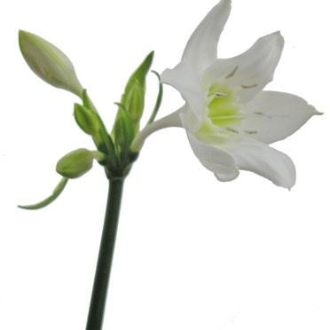 9月29日の誕生花