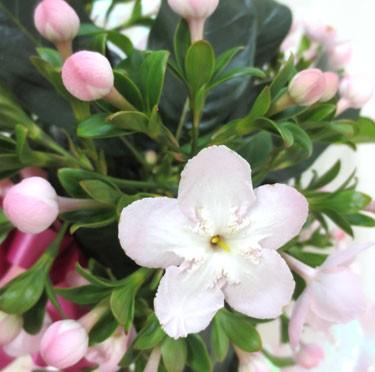 10月29日の誕生花