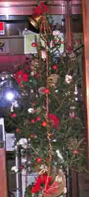 ドイツトウヒ(ピッシャー)のクリスマスディスプレイ