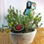 クランベリーの鉢植えギフト