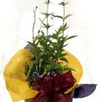 藤袴と竜胆の、秋の寄せ植えギフト