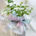 ジャスミンの鉢植えギフト