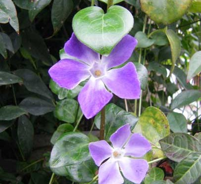 2月24日の誕生花