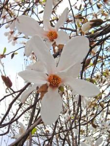 2月9日の誕生花