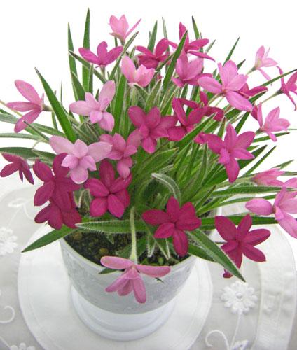 1月23日の誕生花
