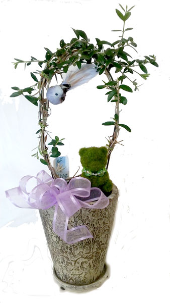 オリーブの鉢植えギフト