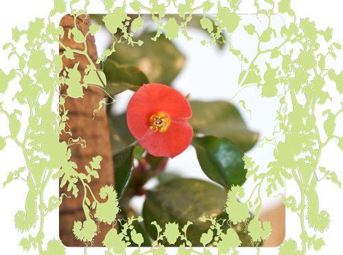 11月21日の誕生花
