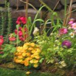 カルセオラリアの庭