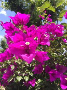 6月30日の誕生花