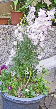 5月21日の誕生花