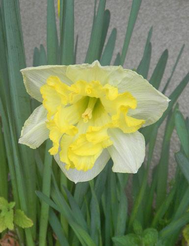 2月8日の誕生花