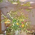 木香薔薇とドウダンツツジ