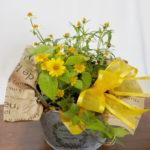 メランポジウムとジニアの鉢植えギフト
