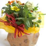 百日草-ジニアの鉢植えギフト