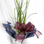 タマスダレの鉢植えギフト