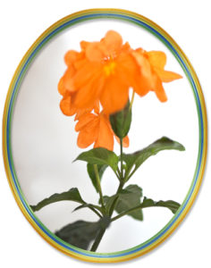 10月24日の誕生花