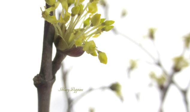 2月29日の誕生花